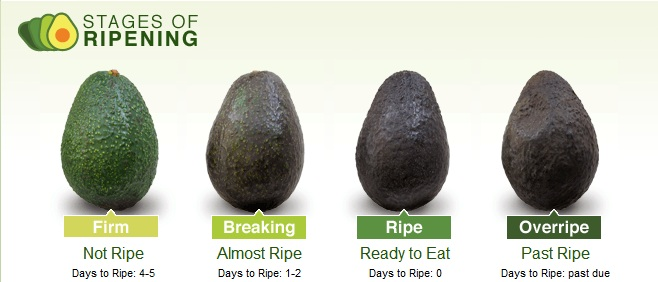 You Look Like An Avocado Quote: Avocados 101 … How To Choose The Perfect One